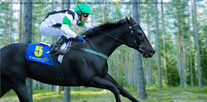 Thoroughbred Horse Picture