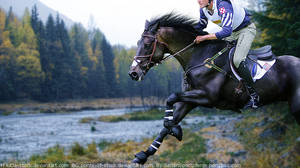 Autumn Horse Picture
