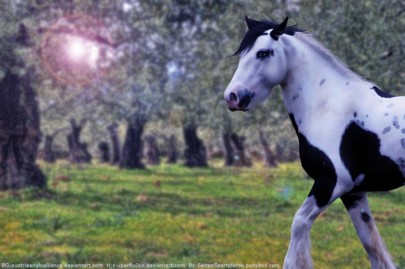 Gypsy Horse by AntLikeFlower
