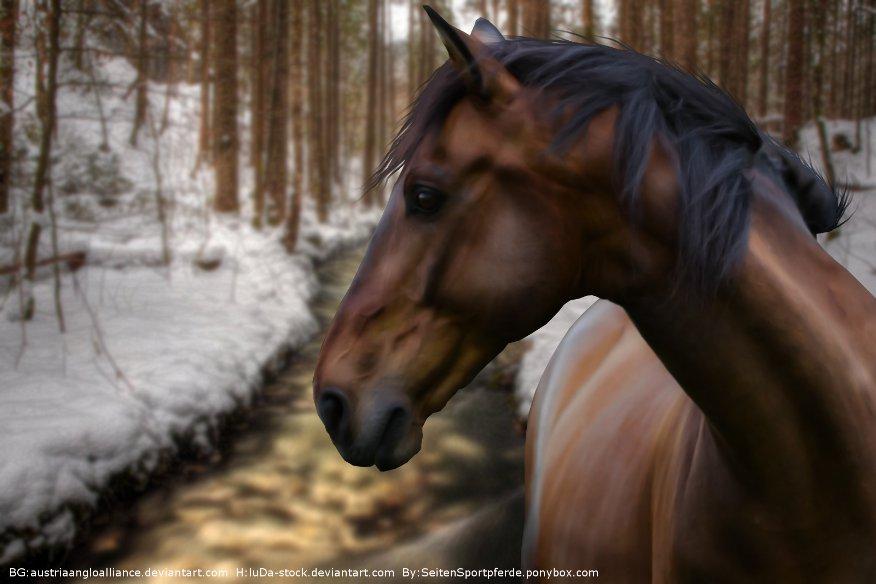 Winter Wonderland by AntLikeFlower