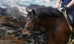 Horse Picture 1