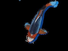 Rod the pond fish