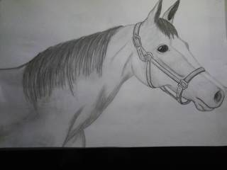 HORSE by Tinkerbell73