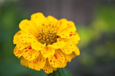 Flower Macro 2 test by daemonkarl