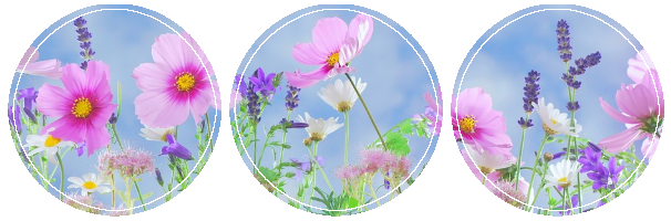 Flower Page Divider
