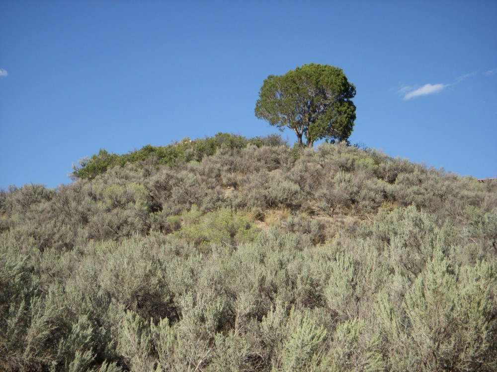 Juniper on a Hill