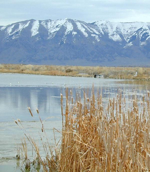 Winter Marsh 2
