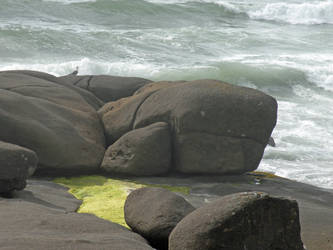 Beached Rock and Gull