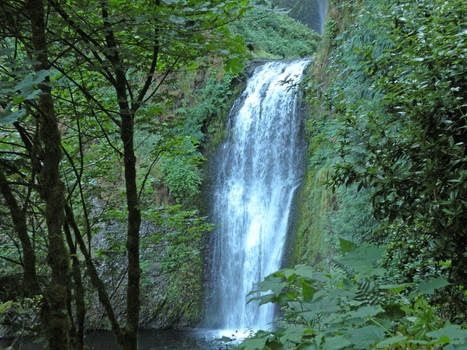 Waterfall in the Columbia River Gorge
