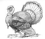 Color Me: Thanksgiving Turkey
