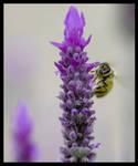 Bee alive