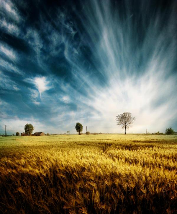 Yellow field by pkritiotis