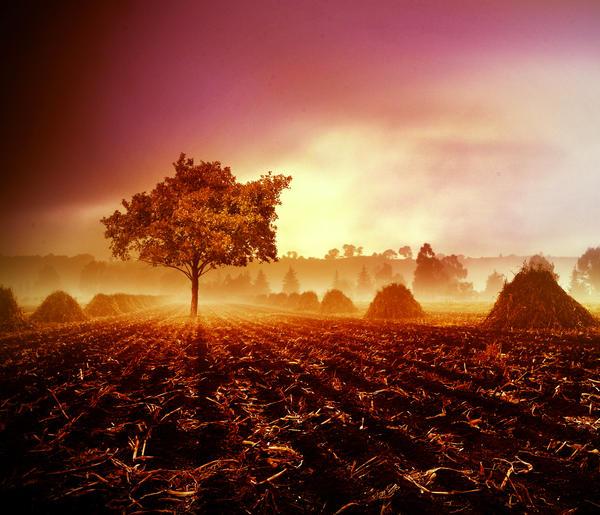 Among the fog by pkritiotis