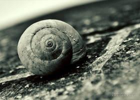 Snail by pkritiotis