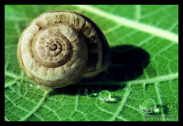 Leaf , Snail and Drops by pkritiotis