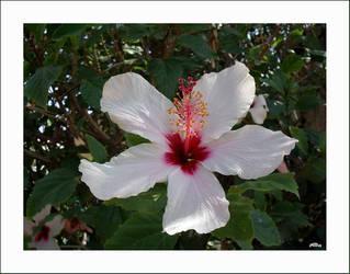 Flower by speedjo
