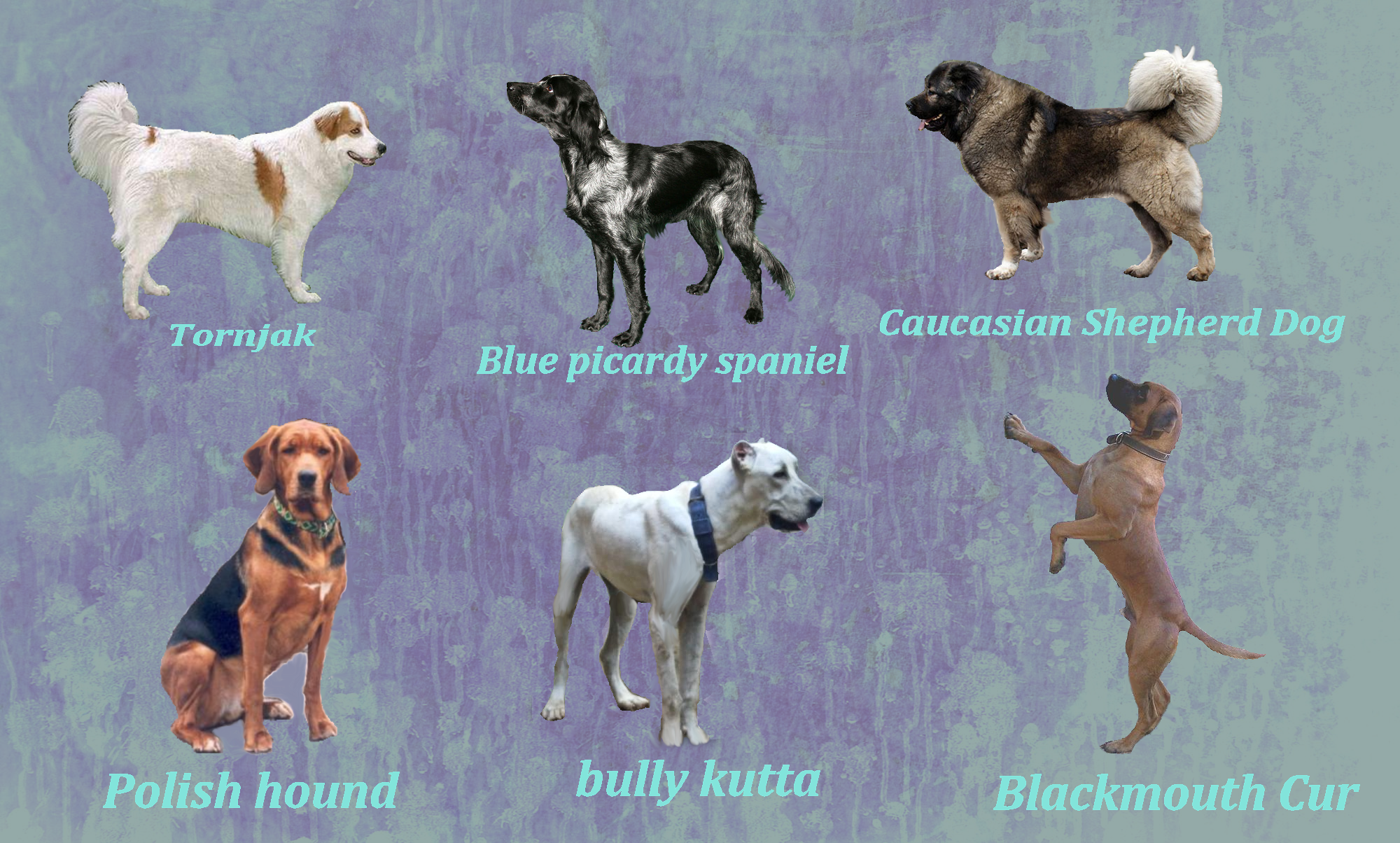 Rare Dog Breeds by Windhaven-Kennel on DeviantArt