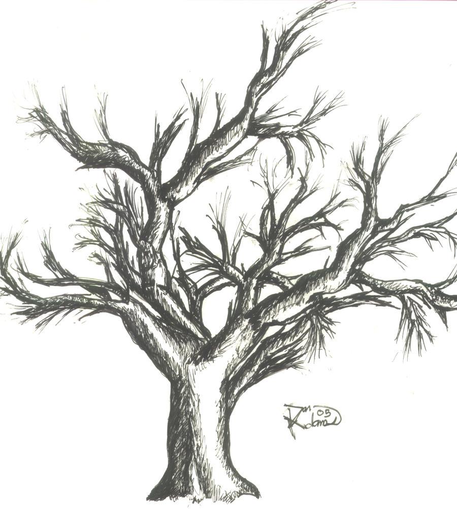 Old Oak Tree by DanielAdams078 on DeviantArt