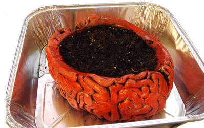 The Brain Pot.