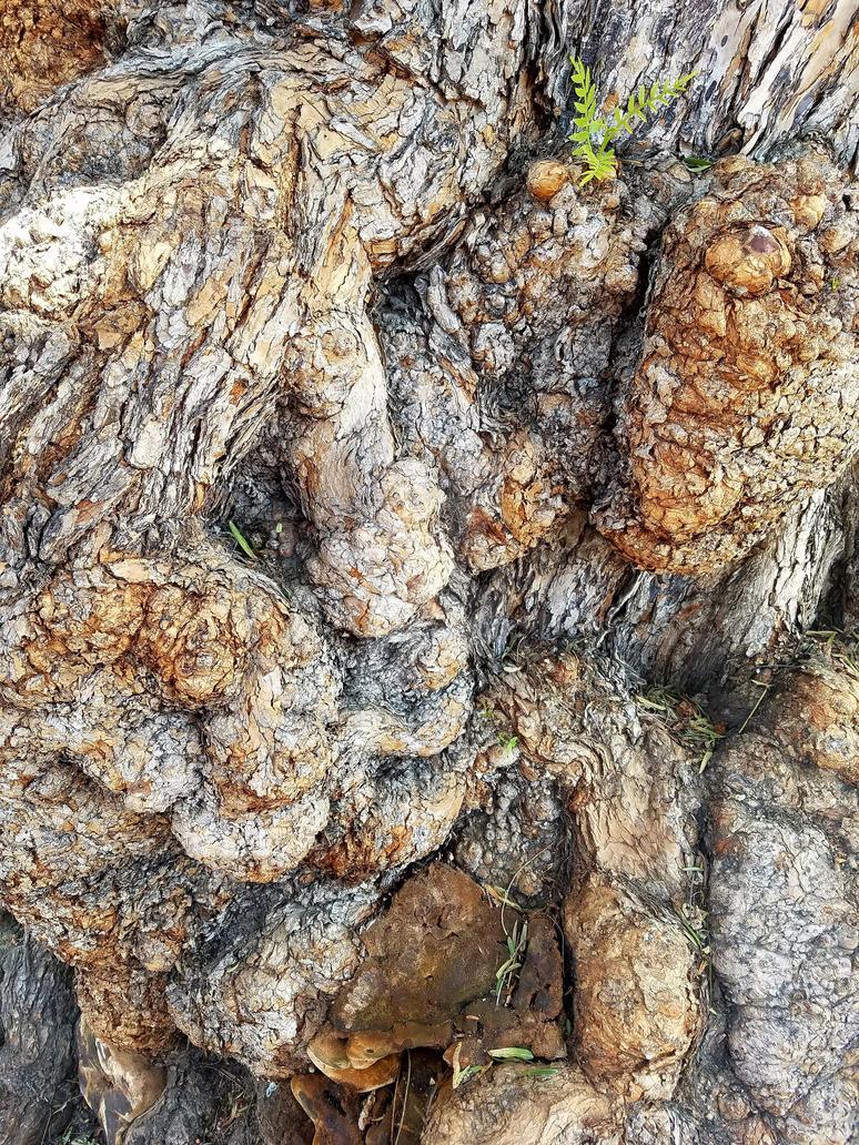 Tree bark again by Chowkeyo