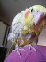 Jo-Jo's first bath by neoreflection