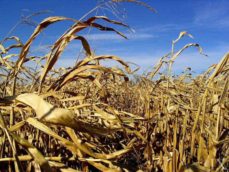 Cornfields of Illinois by theix