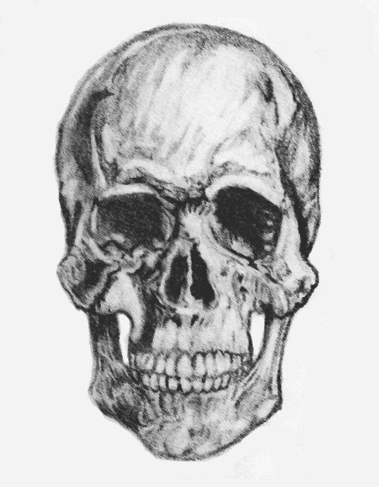 Human Skull Front By Sterling R On Deviantart