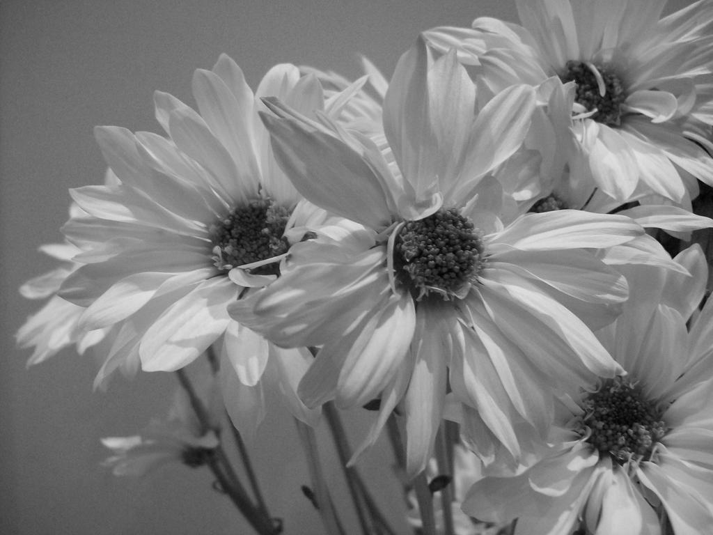 Vintage Flowers Tumblr Black And White