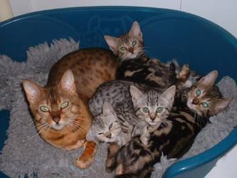 kitten Picture%206%20232 by Nik-2213