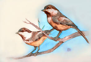 Black Capped Chickadees by Ettelloc