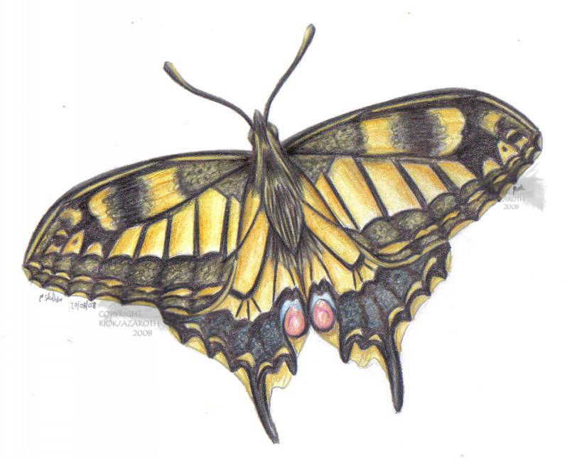 how to draw a swallowtail butterfly