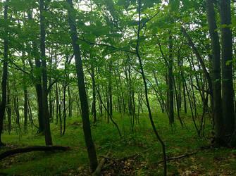 Dark Woods by StoltPunk77