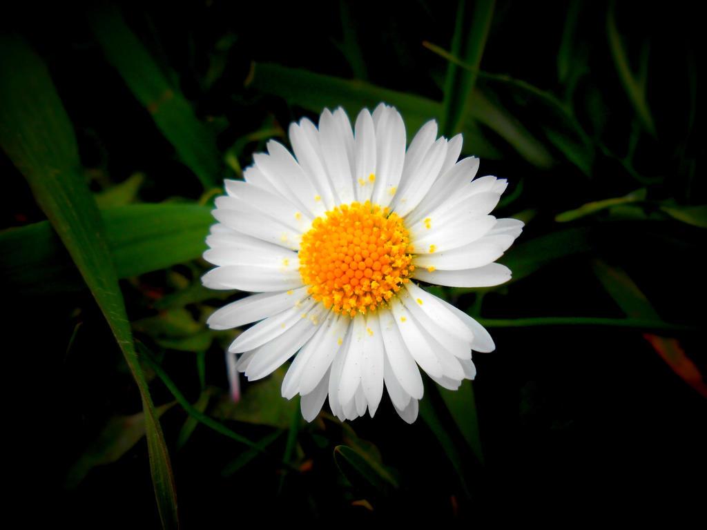 Whiteyellow Flower By Arlen Mctaranis On Deviantart