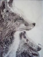 Foxes by JonnoGerritsen