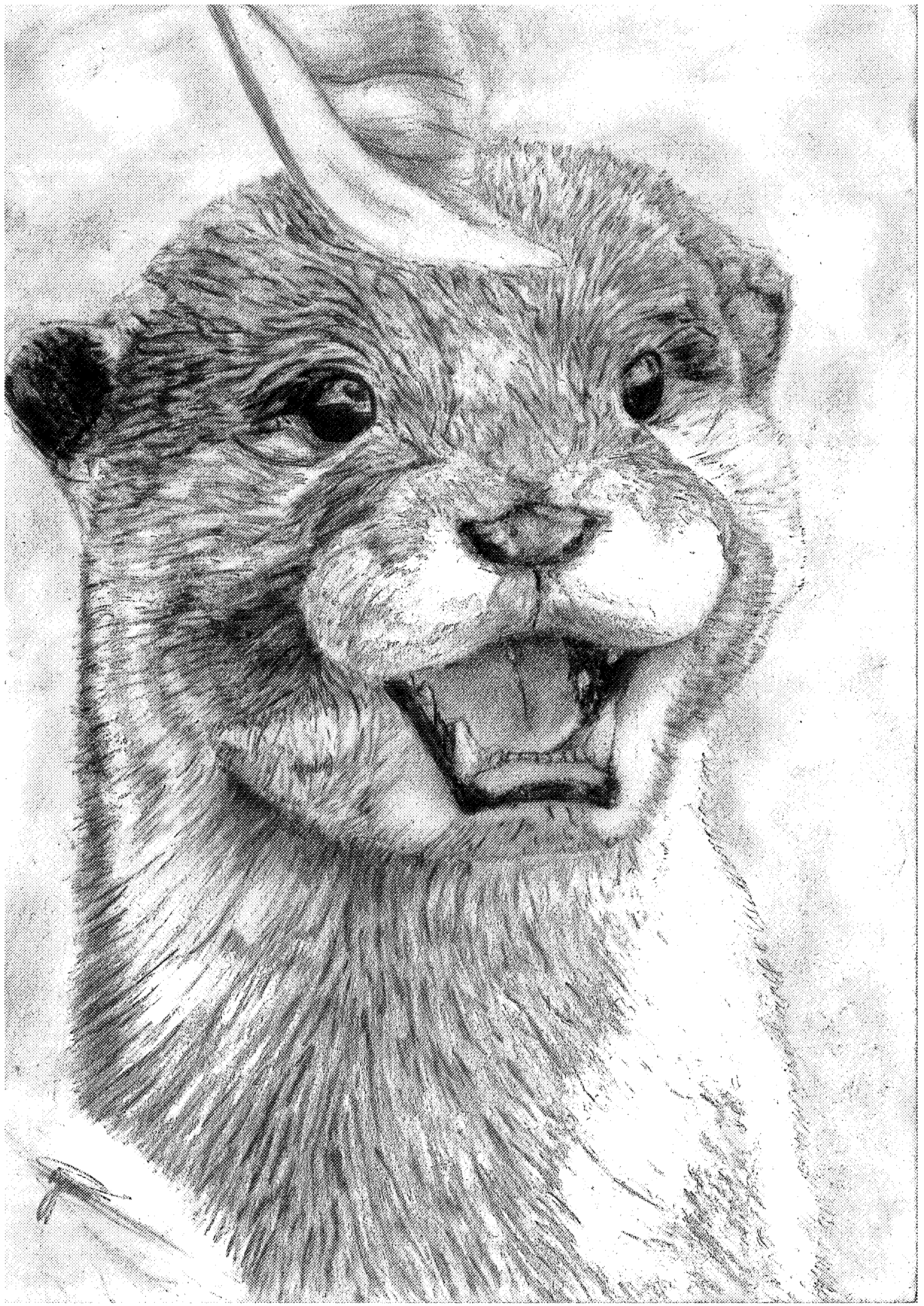 Otter by JonnoGerritsen