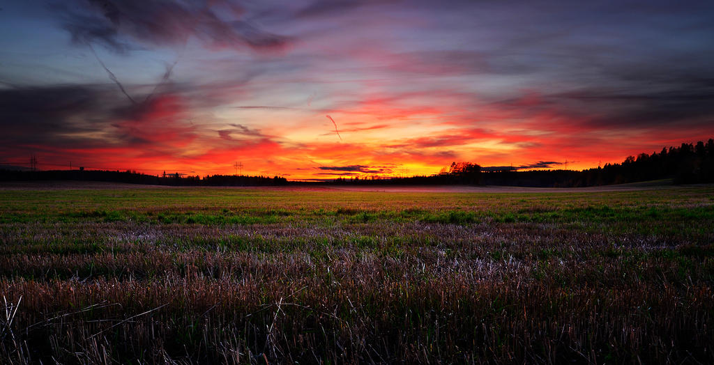 Field At Sunset II by comsic