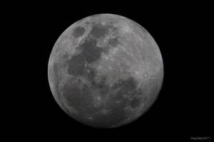 Bark At The Moon II by CapturingTheNight