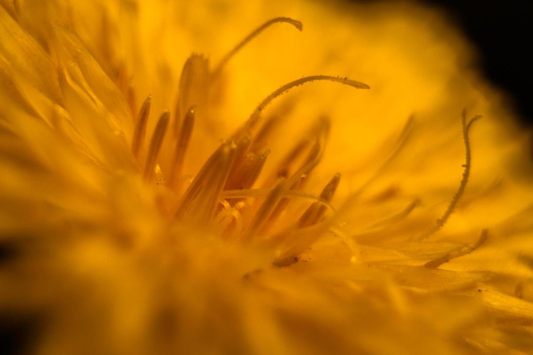 Keltainen II by HubbleWise