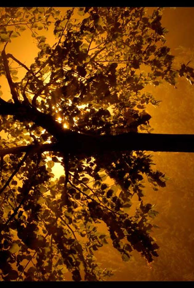 Tree At Night by neonstz