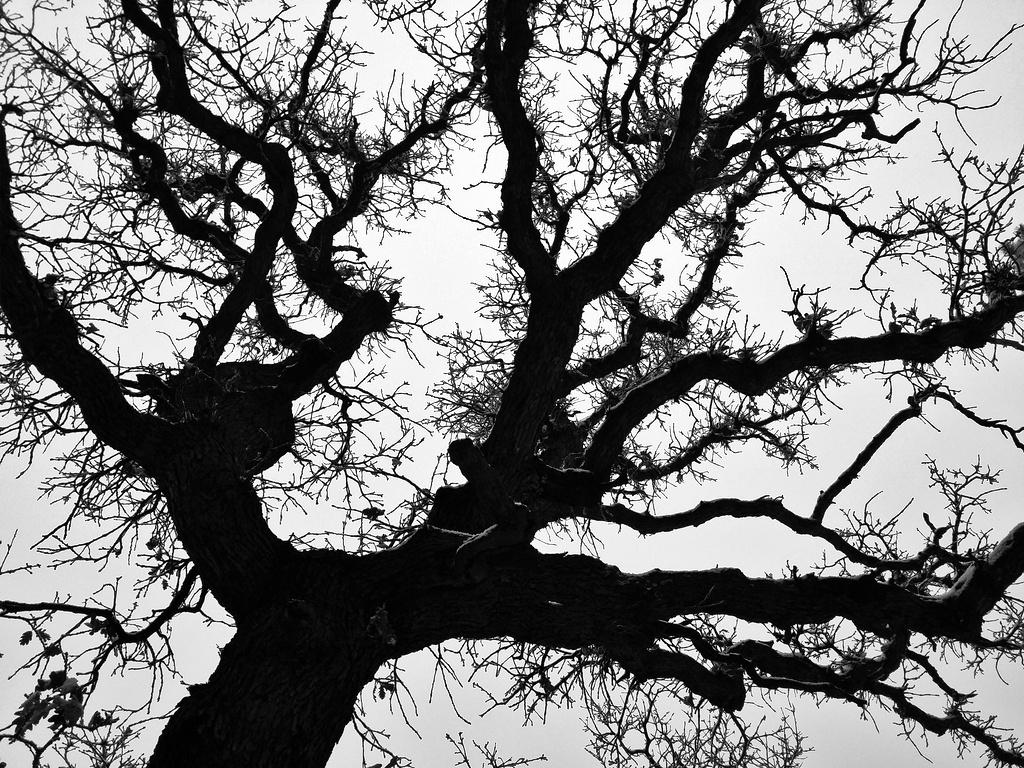 Winter Oak by BradyLane