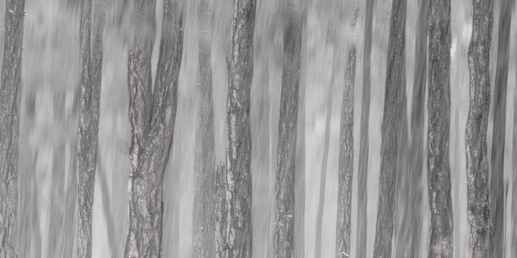 Winter Woods by BradyLane