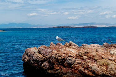 Seagull enjoying the peace by ginavd