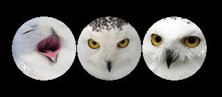 Condica de prezenta - Page 27 White_owl___f2u_divider___by_corruptedead_dbibecl-fullview.png?token=eyJ0eXAiOiJKV1QiLCJhbGciOiJIUzI1NiJ9.eyJzdWIiOiJ1cm46YXBwOjdlMGQxODg5ODIyNjQzNzNhNWYwZDQxNWVhMGQyNmUwIiwiaXNzIjoidXJuOmFwcDo3ZTBkMTg4OTgyMjY0MzczYTVmMGQ0MTVlYTBkMjZlMCIsIm9iaiI6W1t7ImhlaWdodCI6Ijw9MTQxIiwicGF0aCI6IlwvZlwvNjM3YWVmMTgtY2JkNC00OWViLWJlNGEtYWZjNzkzZGRjNjE0XC9kYmliZWNsLWYxMzUyMTRjLWZmYmEtNGU1NS1hZGNlLTliMTRlMjVkYjEwOC5wbmciLCJ3aWR0aCI6Ijw9MzIwIn1dXSwiYXVkIjpbInVybjpzZXJ2aWNlOmltYWdlLm9wZXJhdGlvbnMiXX0