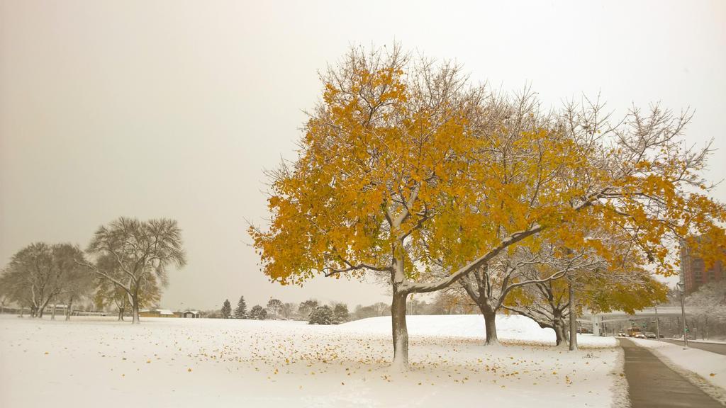 Winter Leaves by michaelmke