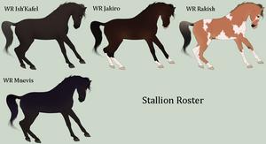 Arabian Stallion Card