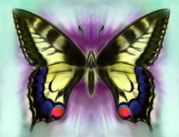 Papilio machaon, or Swallowtail butterfly