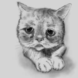 Wailful Cat