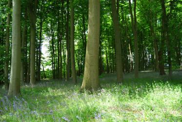 trees by aleeka-stock