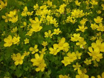 Nice Flowers by balacicek
