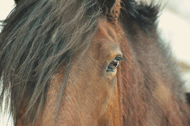 Horse Eye by AnnRachi